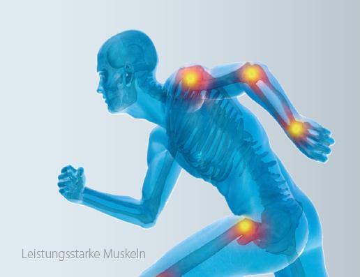 Astaxanthin unterstuetzt die Muskeln