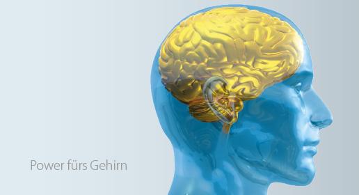 Astaxanthin gibt dem Gehirn Power