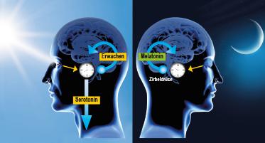 Tryptophan zu Serotonin und Melatonin